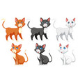 a set of different cat vector image