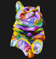 colorful cat isolated on black background vector image