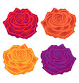 beautiful multi-colored roses flower vector image vector image