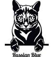 russian blue cat - cat breed cat breed head vector image vector image