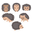 set of cute hedgehogs set of cute hedgehogs vector image vector image
