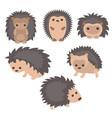 set of cute hedgehogs set of cute hedgehogs vector image