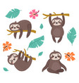 sloths vector image vector image
