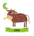 Cow C letter Cute children animal alphabet in vector image
