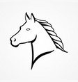 line art of a horse head vector image vector image