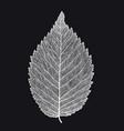 skeletonized leaf on a black background vector image