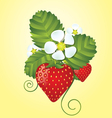 Strawberry floral background vector image