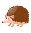 little hedgehog on white background vector image