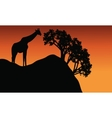 Giraffe silhouette in cliff scenery vector image vector image