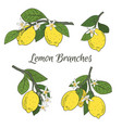 set collection of branches with lemons green vector image