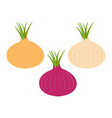 onion ripe bulb set with green sprout icon red vector image vector image