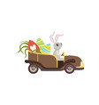 cute bunny driving vintage car decorated with vector image vector image