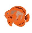 Orange Fish Isolated on White Background E vector image