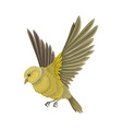 bird as warm-blooded vertebrates or aves