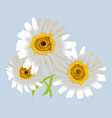 chamomile or camomile flowers isolated romantic vector image vector image