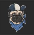 pug dog hat and bandana vector image vector image