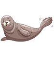 Seal with gray skin vector image vector image