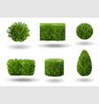 set of decorative plants vector image