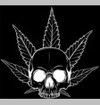 white silhouette skull with leaves marijuana vector image