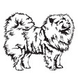 decorative chow chow vector image
