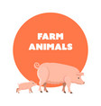 cute funny pets pig and piggy isolated vector image