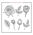 Flower set hand drawn rose vector image