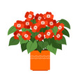 impatiens house plant in flower pot vector image