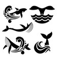 white and black wild whale in sea waves and water vector image