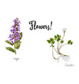 wild plants and flowers hand drawn in color vector image