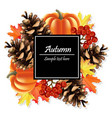 autumn card background pumpkin and colorful vector image