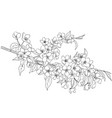 flowering apple tree branch vector image