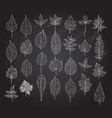 hand drawn leaves set vector image vector image