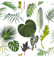 many kinds green tropical leaves vector image