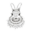 rabbit sketch hand drawn vector image vector image