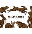 wild hares background rabbits are sitting and vector image vector image