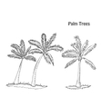 Palm trees Set of sketches vector image