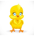 beautiful little yellow chicken isolated on a vector image vector image