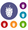blackberry fruit icons set vector image vector image