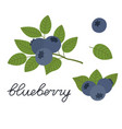 blueberry flat design vector image