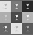 coconut palm tree sign grayscale version vector image vector image