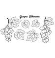 grape pictogram set vector image