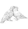 lovers Pigeons kissing vector image