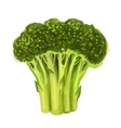 picture of broccoli vector image