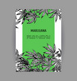 banners with hemp leaves black-white design vector image vector image