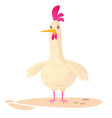 cartoon big fat hen chicken isolated on a white vector image vector image