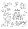 chickpea plant hand drawn vector image