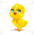 cute bachick isolated on a white background vector image vector image