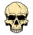 human skull in vintage style design element vector image