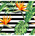 tropical floral seamless background vector image vector image