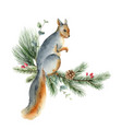 watercolor christmas card with a squirrel vector image vector image
